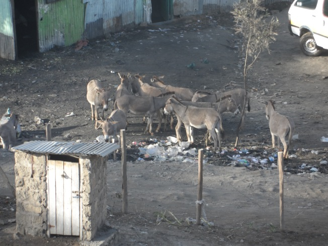 These donkeys in Narok town kept me up during the first night. They brayed the night through!