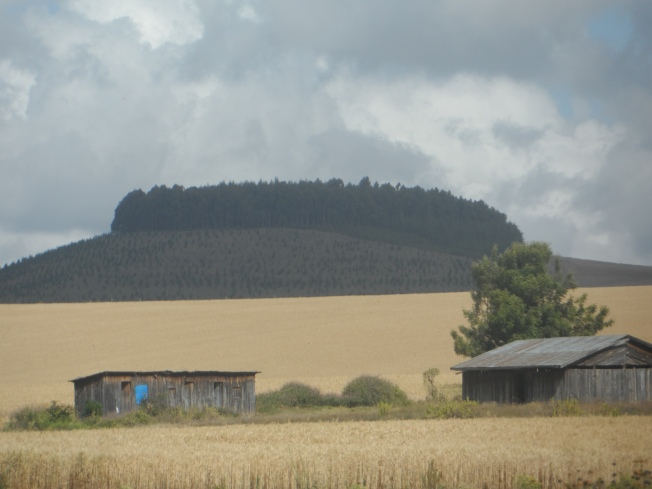 Check out the wheat in the foreground and the hill in the background