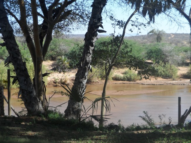 Ewaso Nyiro river, home to huge crocodiles that we didn't see during our time there
