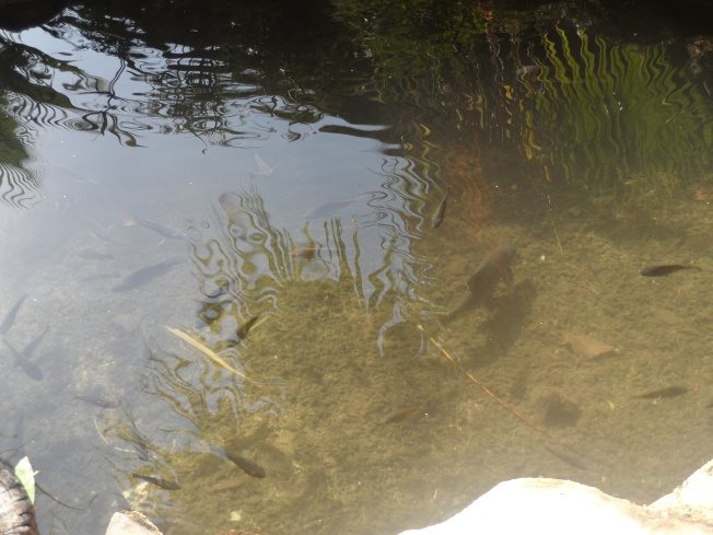 One of the natural pools in the lodge with fish happily swimming