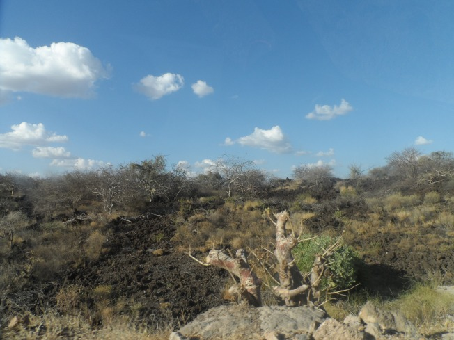 The flora in the semi arid area