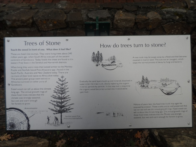 Did you know that trees can turn into stone?