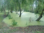 The light green is a deep swamp....
